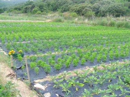 b1316cc284fce AgroAnuncios.es - Explotacion agraria. Explotacion agraria en Alava ...