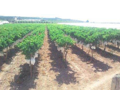 647711319f9e5 AgroAnuncios.es - Explotacion agricola en monforte del cid. Fincas ...