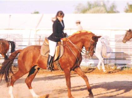Cursos Homologados de cursos/caballos/badajoz cp6 660